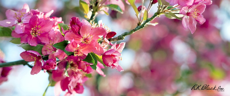 10 Beautiful Free Spring Wallpapers for Your Desktop - RK Black, Inc.